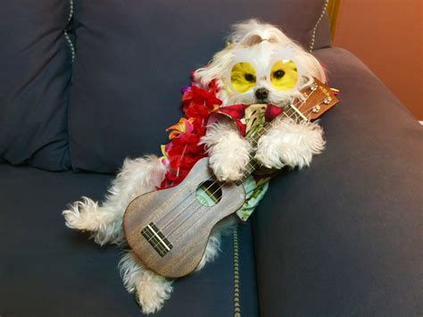 puppies their puppies dogs canines and their pet ukuleles photos ukulele