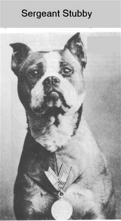 Sergeant Stubby German Battle Weary With Medal For Bravery Sgt Stubby 17 Battles Captured German Nearly