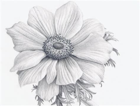 Realistic Flower Drawing Tutorial