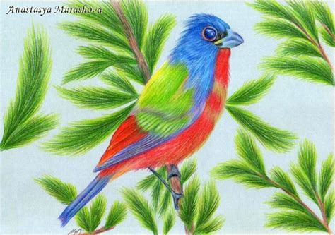 Drawing A Bird With Colored Pencils Using Painted By Colored Drawings