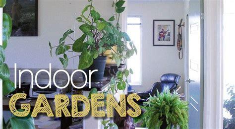 indoor plants  create  indoor garden sanctuary