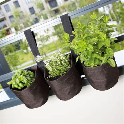 coltivazione idroponica in casa piante aromatiche in casa orto coltivare piante