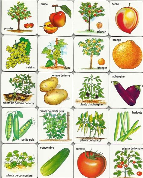 printable images vegetables free printable memory game free printables pinterest