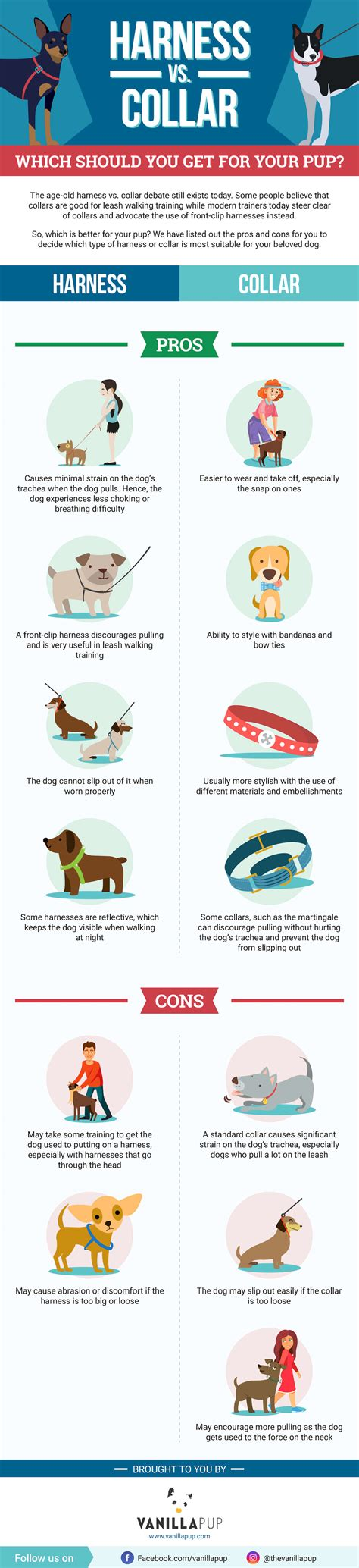 harness vs collar for puppy infographic harness vs collar which is better for your