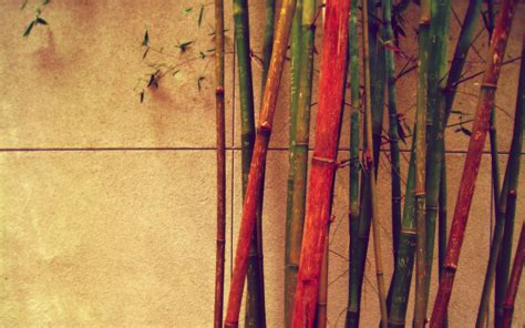 imagenes wallpaper bamboo 66 retro wallpaper for desktop and mobile