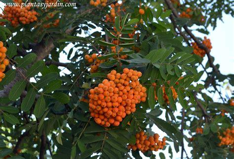 imagenes de flores que dan frutos los frutos en las plantas plantas jard 237 n