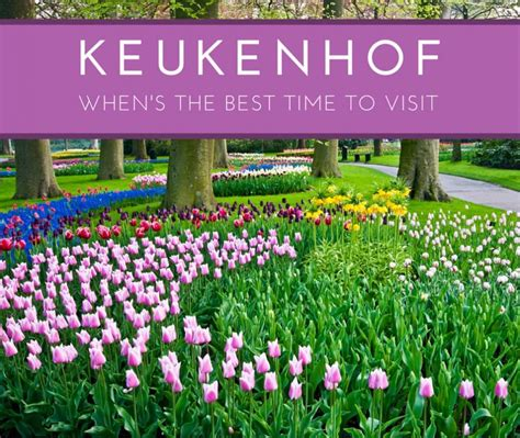 the best time to visit keukenhof gardens lisse the netherlands cheeseweb