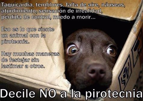 imagenes niños maltratados c 243 mo proteger a los animales de la pirotecnia rescate animal