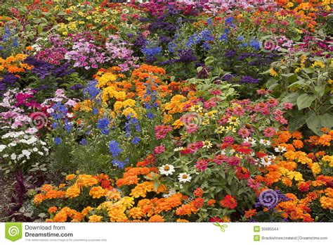 Variety Of Flowers For Garden Flower Bed Stock Images Image 35685044