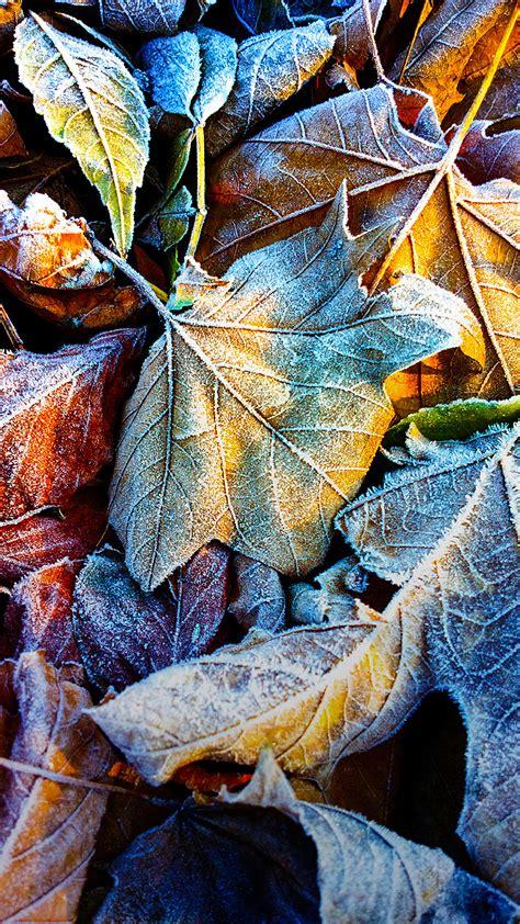 frozen leaves wallpaper frozen leaves nokia lumia stock iphone 6 plus hd wallpaper