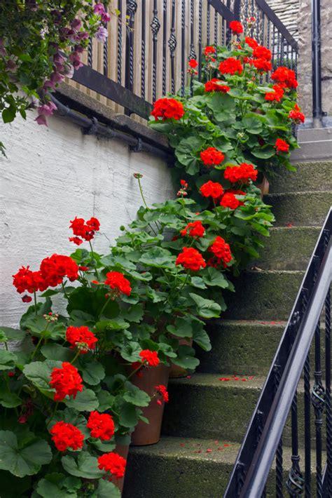 treppen verschönern treppe versch 246 nern idee