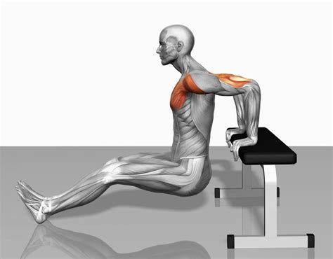 triceps on bench bench dips this exercise works out the triceps and pecs