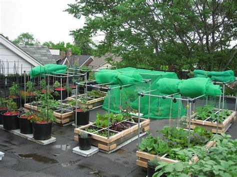 Rooftop Vegetable Garden Garden Pinterest Gardens Roof Vegetable Garden