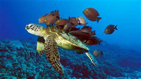 Great Tas Belanja Lipat Nemo Fish banco de im 193 genes viaje por el fondo mar iv animales acu 225 ticos
