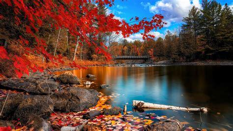 hd themes beautiful windows 8 1 theme hd wallpapers beautiful autumn leaves