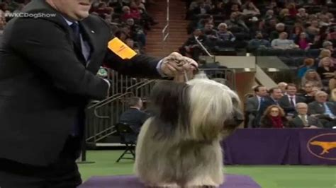 Best In Show Puppy 15kg usa dogs westminster best in show 2015