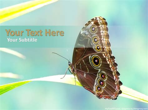 powerpoint themes free download butterfly free junonia butterfly powerpoint template download free
