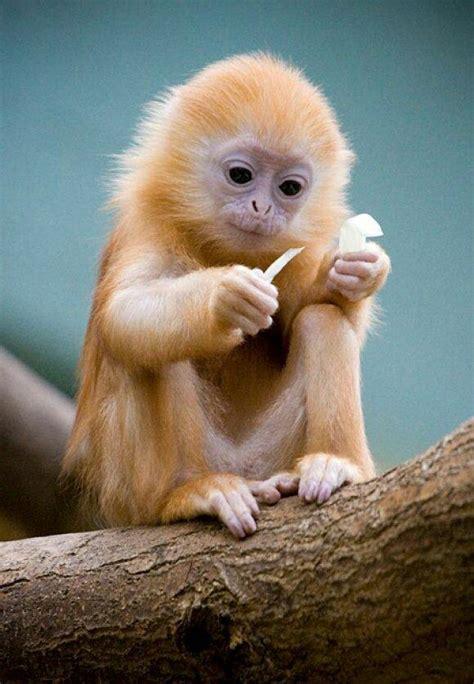 Small Animals Type C my auntie sends me the cutest monkeys animalitos de jah babies animal