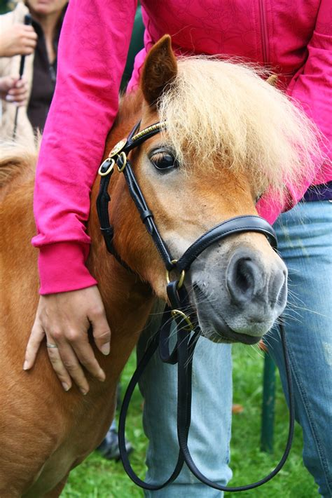 ada service miniature horses as service animals the americans with disabilities act ada