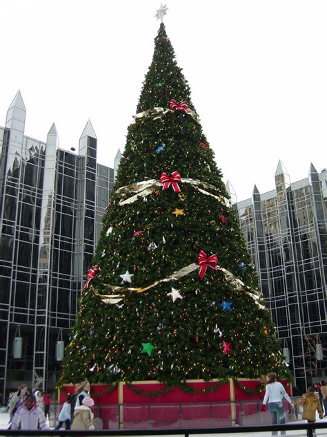 collections of large outdoor christmas trees easy diy