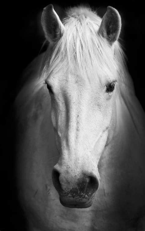 Cavalos Papel De Parede APK Baixar - Grátis Personalização