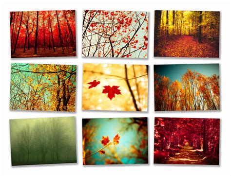 fall wall decor autumn photography wall decor wall decoration pictures