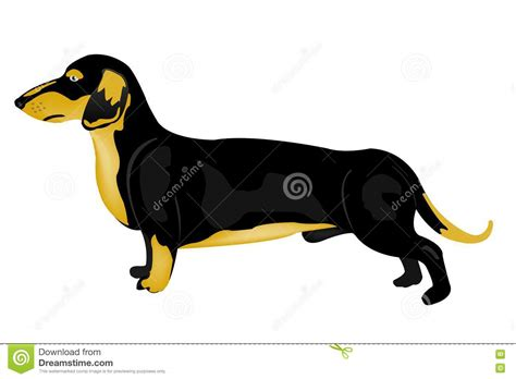 puppy rate rate stock photo image 19070600