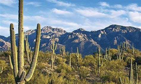 Tucson Records Tucson Set Records For Warmest Novembers