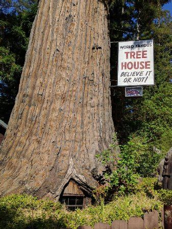 famous tree houses world famous tree house piercy ca top tips before you