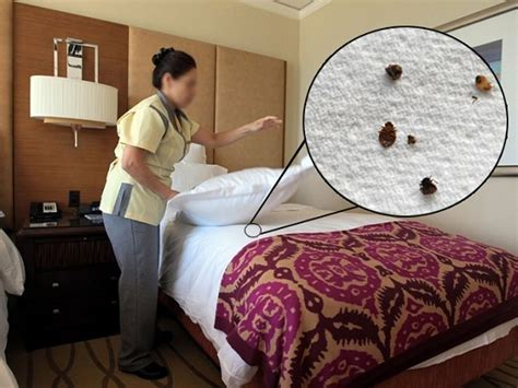 prevent bed bugs  hotels hotel mamalla heritage