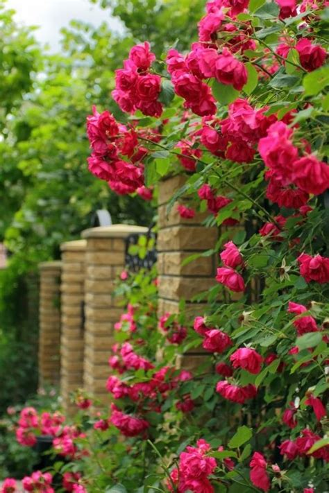 Home Decorating Tips For Beginners the secret of successful rose gardening tips for