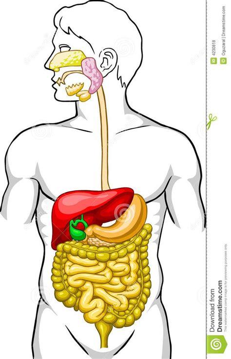 imagenes figurativas del cuerpo humano las 25 mejores ideas sobre sistema digestivo en pinterest