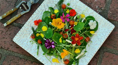 Edible Garden Flowers Edible Landscaping Ideas Design An Vegetable Garden