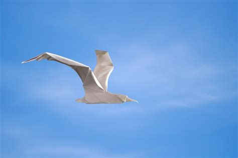 Origami Seagull - origami sketchbook by morollon guallar book review