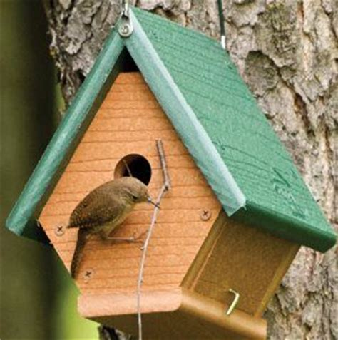 wren house plans 25 best bird house plans ideas on diy