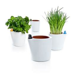Self Water Pot Self Watering Flower Pots Ippinka