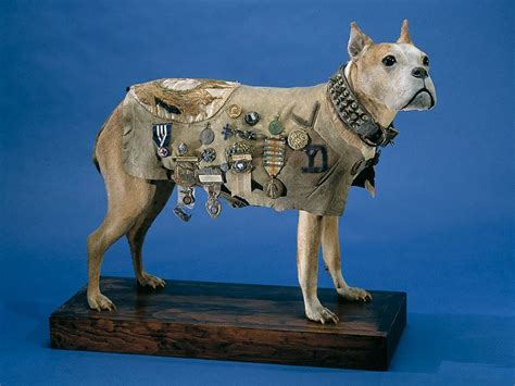 Sergeant Stubby Medals How Did Animals Even Slugs Serve In World War I National Museum Of American History