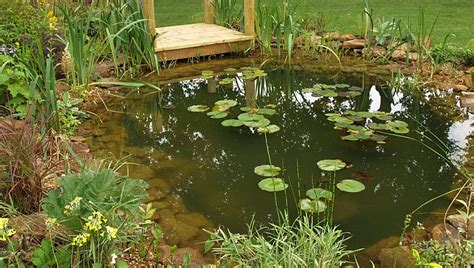 natural backyard pond formal and natural garden pond designs landscape garden