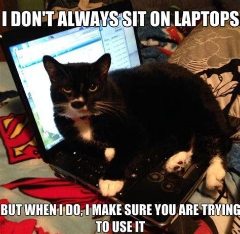 Funny Meme Pictures 2014 - funny cat logic meme jokes 2014