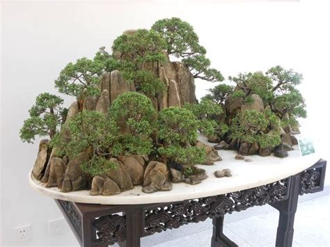 Juniper Bonsai Rock Planting Bonsai Pinterest Bonsai Rock Garden