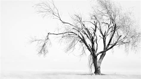 winter white tree sad wallpapers best wallpapers