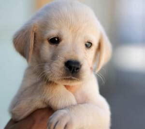 cute puppy dog wallpapers download download free puppy wallpapers for your mobile phone
