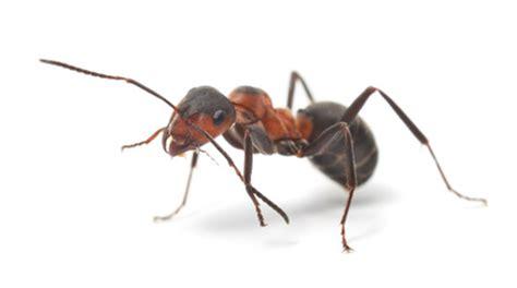 Ameisen Auf Der Terrasse 4711 by Viele Ameisen Auf Terrasse Im Haus 187 A S S Gmbh Hilft