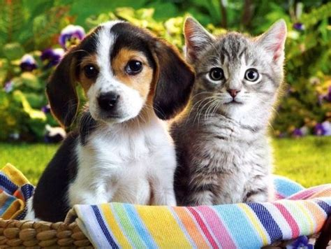 cutecool pets  cute cats  dogs  pictures