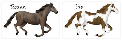Banc Bis Gal Rp robes chevaux banc bis gal rp