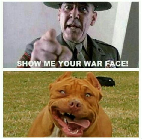 War Face Meme - show me your war face funny animals pinterest