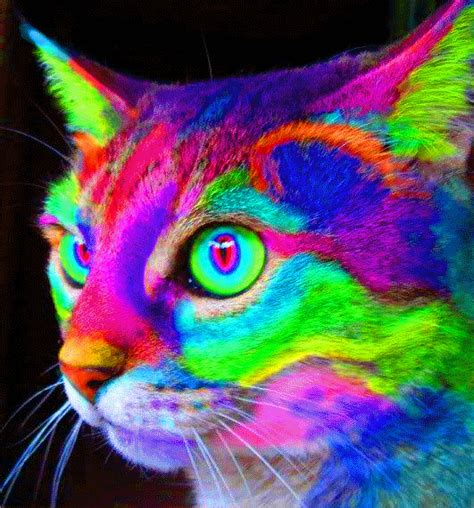 Colors Cat psychedelic trippy cat gif wifflegif