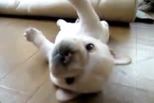 puppy fails 10 totally aww worthy puppy fails