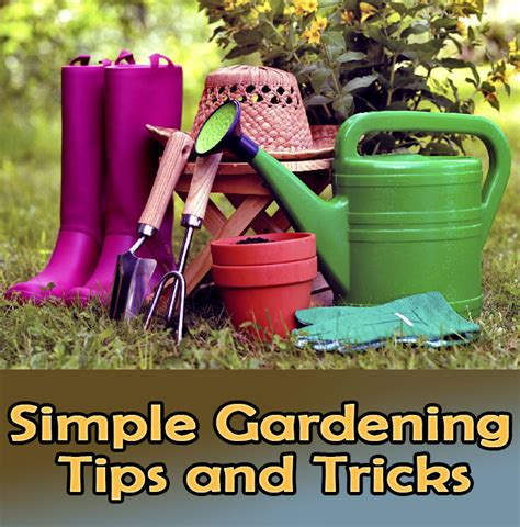quiet cornersimple gardening tips  tricks quiet corner