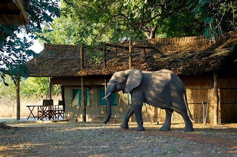 the camp � en suite safari tents flatdogs camp